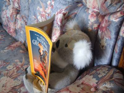 Alb3rt reading National Geographic
